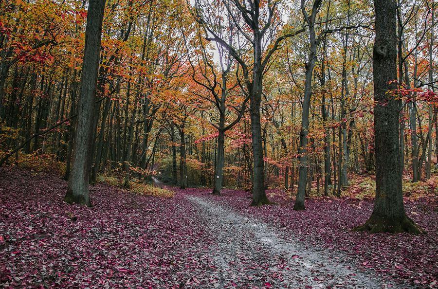 Image de la catégorie Broyeurs forestier